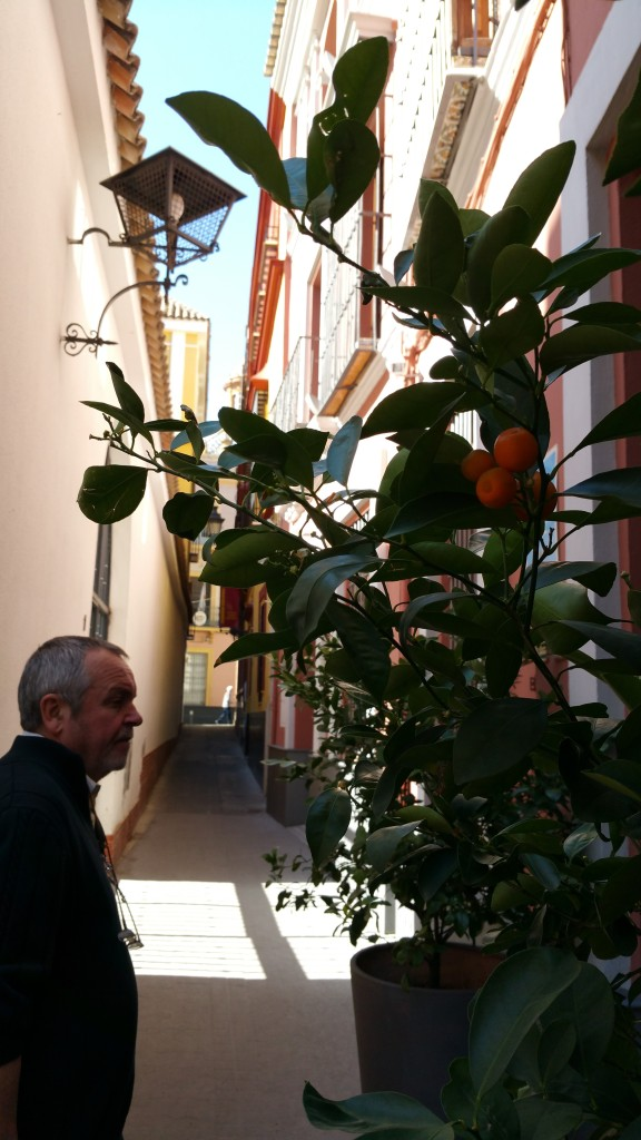 Walking the narrow streets of Seville
